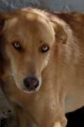 Izzy has beautiful eyes