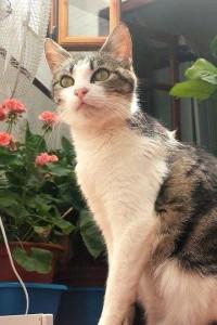 mumcat1