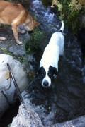 dora in the water again