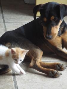 JUNIOR WITH CAT