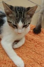 Beau Kitten 2