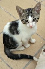 Beau Kitten 3