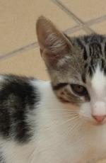 Beau Kitten 4