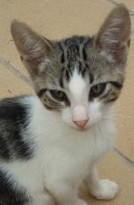Beau Kitten 5