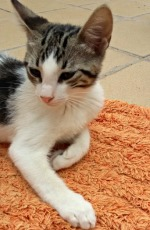 beau kitten 1