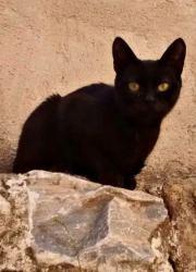 mistercat1