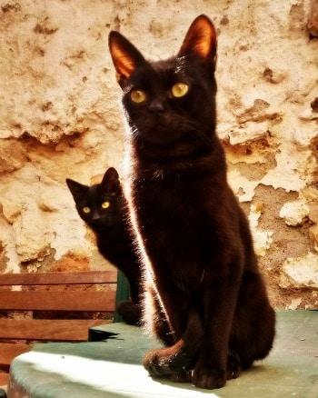 mistercat2