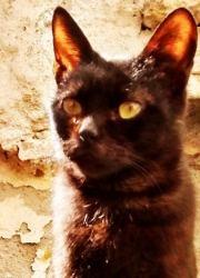 mistercat3