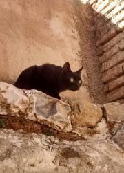 mistercat4