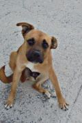 Susie – 1 year old female looking for a forever home