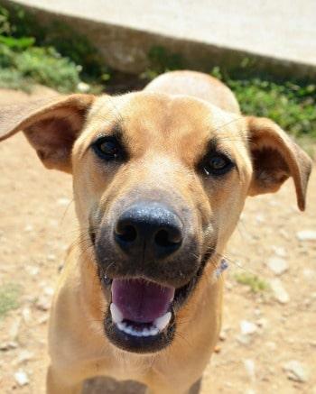 10 razones para adoptar un perro de rescate