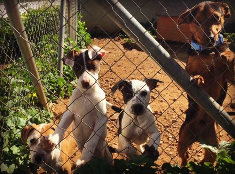 Dogs at Valle Verde Animal Rescue