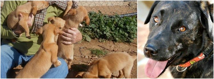 Valle Verde puppies and oldies
