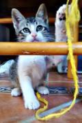 Fiona – playful female kitten