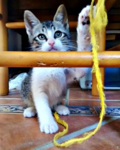Kitten plays with string