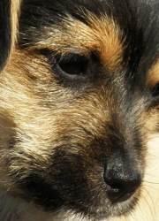 Sonny – Male terrier puppy
