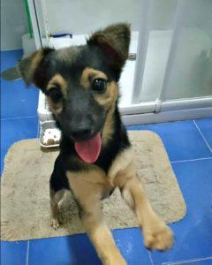 Sweet Batty - small dog needs new home