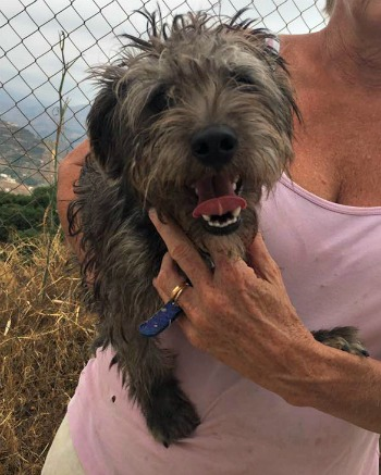 Yang is a small male dog looking for a home