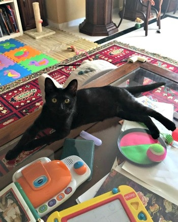 Little black kitty lounging on the floor
