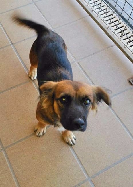 Skye, small female dog seeks loving home