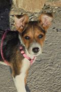 Chloe – sweet female puppy looking for a forever home