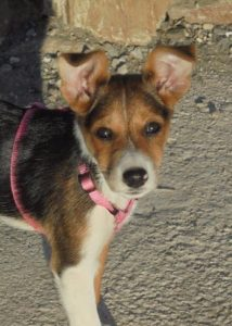 Sweet 3 month old female puppy, looking for a forever home