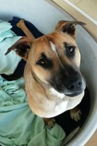 Edward, friendly male dog seeks home