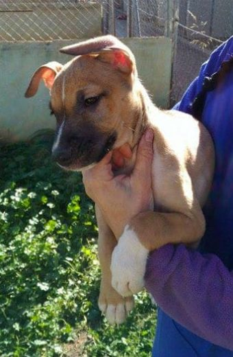 Ernie – male puppy looking for a home
