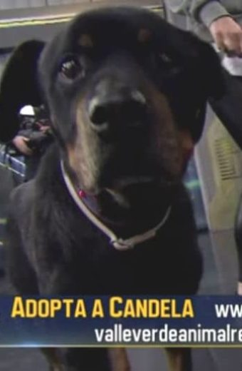 Our Candela meets Dani Rovira and makes her TV debut on 'El Hormiguero'