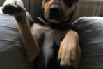 Toby friendly 1 year old male dog looking for a forever home