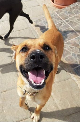 Pluto – 1 year old male dog