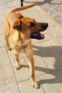 Pluto, one year old male dog seeks forever home
