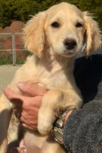 Paco is a male terrier cross puppy looking for a loving home.