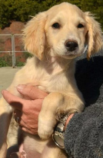 Paco – friendly male terrier pup needs a home