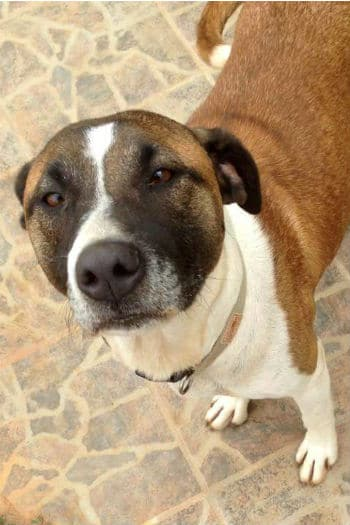 Peggy is a friendly female dog looking for a loving home