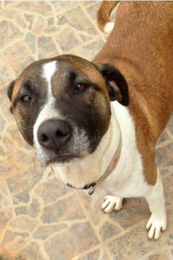 Peggy es una amigable perra que busca un hogar amoroso