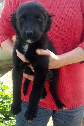 Polly female small terrier breed puppy seeks loving home