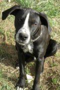 Daniel – 1 year old male dog seeks loving home