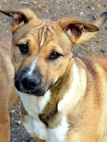 Ernie is a friendly male puppy looking for a new home.