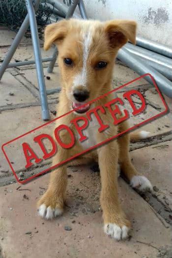 Canca adoptó