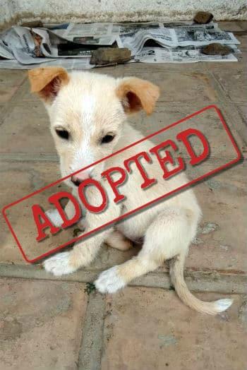 Cora adopted
