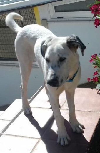 George – beautiful boy looking for a new home