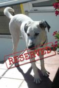 RESERVED: George – beautiful boy looking for a new home
