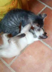 Shiva and Moojjii