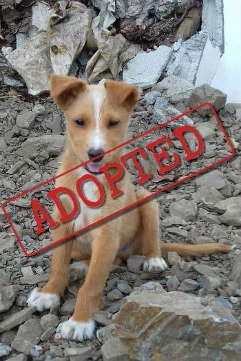 Troy adoptó