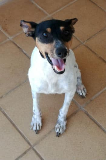 Angel, female Bodeguero seeks happy home