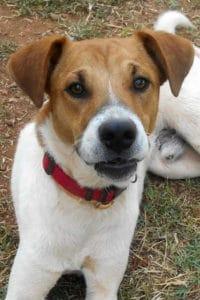 Booboo young male dog seeks loving home