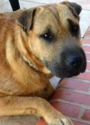 Bruno 4