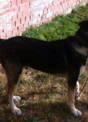 Curro 6