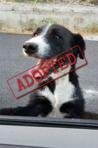 Kenny has been rehomed in the Uk